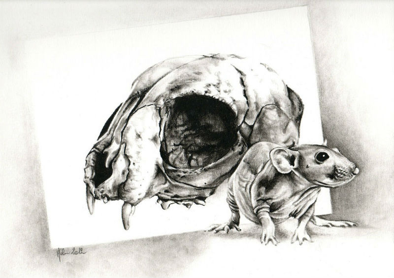 dessin crane de chat r�aliste